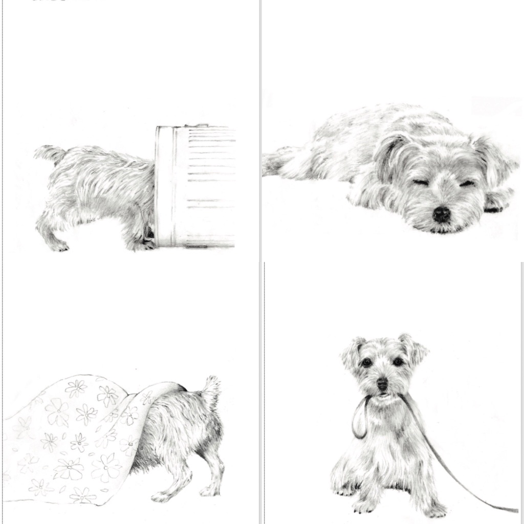 Selection pack of 4 terrier inspired greeting cards – blank inside
